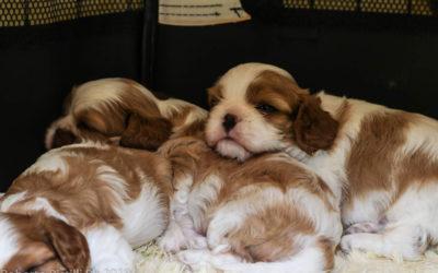 Cuccioli disponibili!